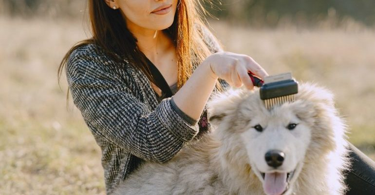 Woman grooming her dog